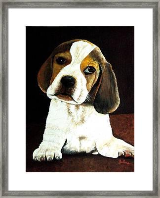 Beagle Puppy Framed Print by Zelma Hensel
