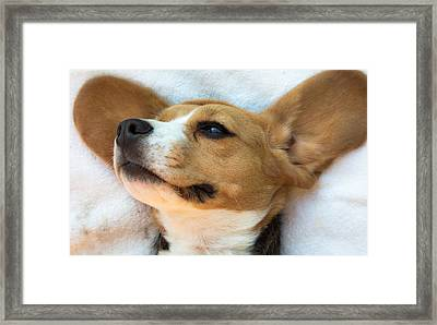 Beagles Dreams Framed Print
