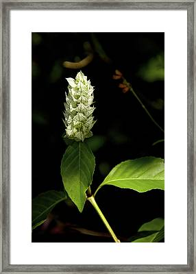 Beam Of Light Framed Print by Kathi Isserman
