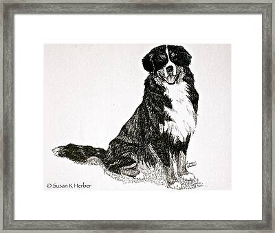 Beaming Berner Framed Print by Susan Herber