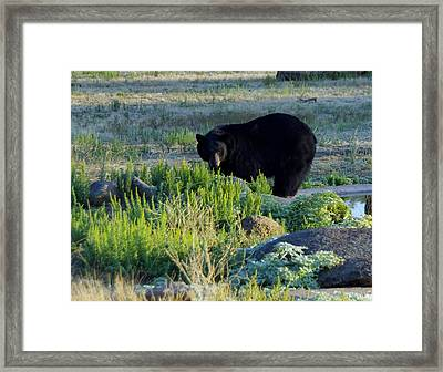 Bear 3 Framed Print