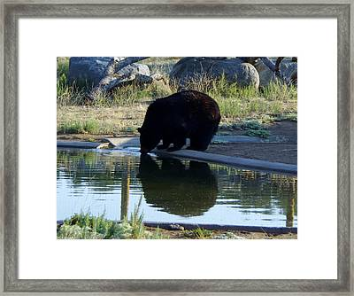 Bear 4 Framed Print