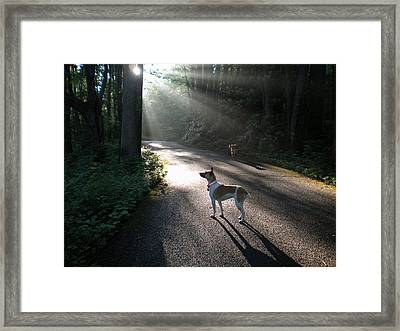 Framed Print featuring the photograph Bear Alert by Diannah Lynch