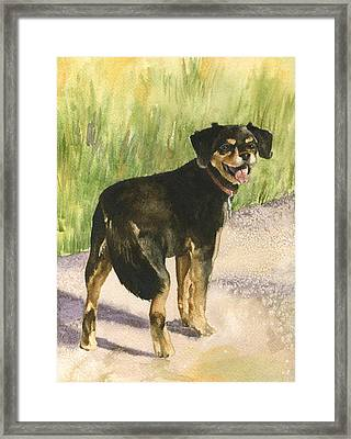 Bear Framed Print by Anne Gifford