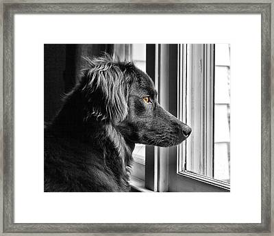 Bear At Window Framed Print