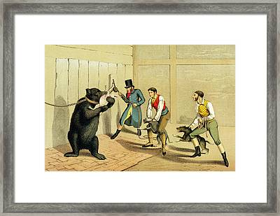 Bear Baiting Framed Print by Henry Thomas Alken