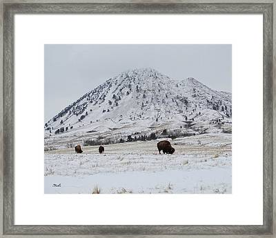 Bear Butte Buffalo Framed Print