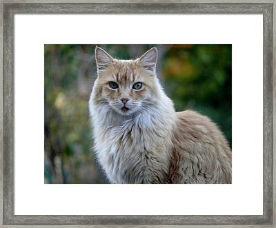 Bear-cat Framed Print by Jacquelyn Roberts
