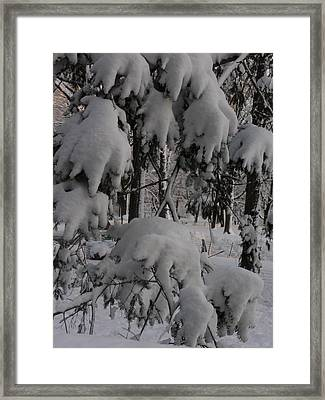 Bear Claws Framed Print by Winifred Butler