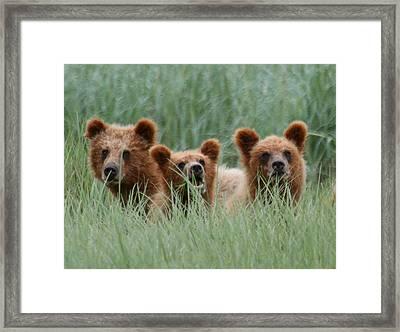Bear Cubs Peeking Out Framed Print
