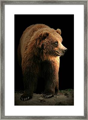 Bear Essentials Framed Print by Diana Angstadt