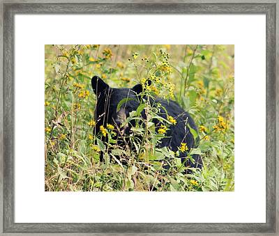 Bear Gaze 2 Framed Print