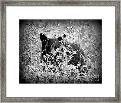 Bear Gaze Framed Print