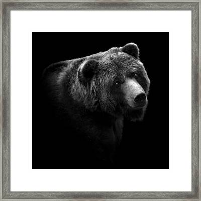 Portrait Of Bear In Black And White Framed Print