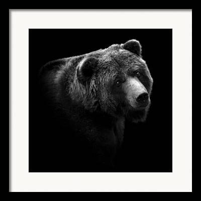 Black Bear Framed Prints