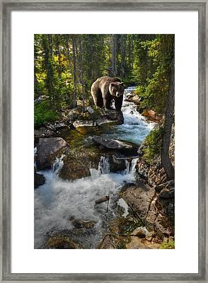 Bear Necessity Framed Print by Ken Smith