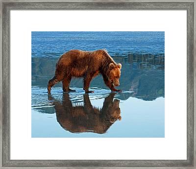 Bear Of A Reflection 8x10 Framed Print