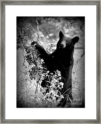 Bear Pose Framed Print