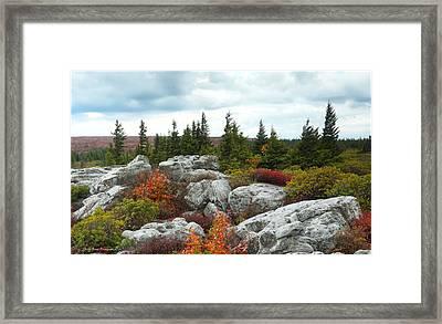 Bear Rocks Framed Print