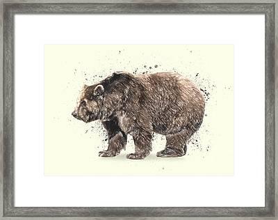 Bear Study Framed Print by Taylan Apukovska