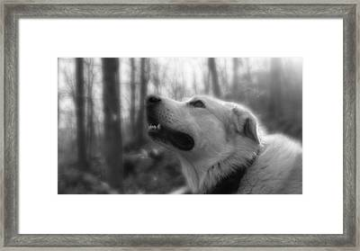 Bear Tooth Not Camera Shy Framed Print