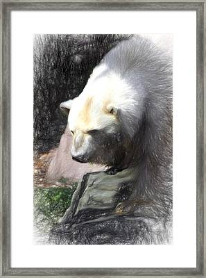 Bear Visions Framed Print by Terry Cork