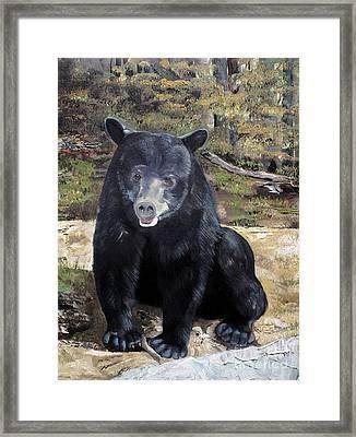 Framed Print featuring the painting Bear - Wildlife Art - Ursus Americanus by Jan Dappen
