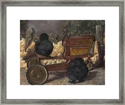 Bearded Black Silkie Bantam Pair Framed Print by Gilda Goodwin