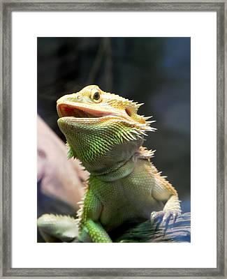 Bearded Dragon Framed Print by Michael Caron