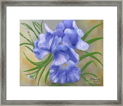 Bearded Iris Blue Iris Floral  Framed Print by Judy Filarecki