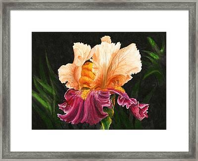 Bearded Iris Framed Print by Karen Wright