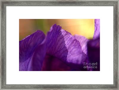 Bearded Iris Undulations Framed Print by Anna Lisa Yoder