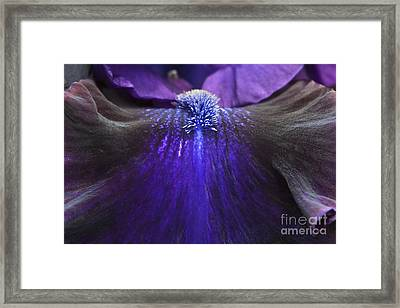 Bearded Iris 'whats My Line' Framed Print by Tim Gainey