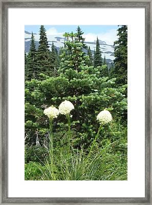 Beargrass Framed Print