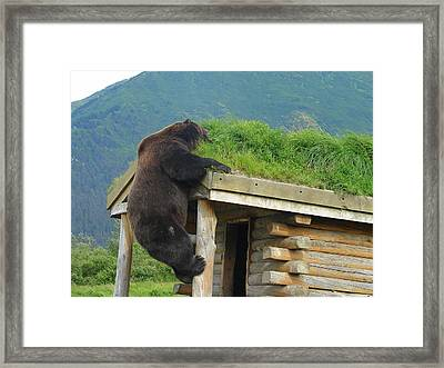 Bearly Able Framed Print by Lew Davis
