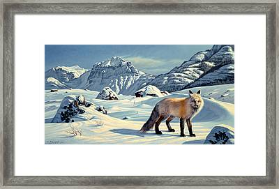 Beartooth Fox Framed Print