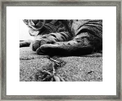Beast Framed Print by Lucy D