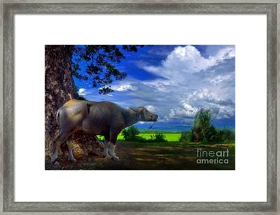 Beast Of Burden Framed Print by George Paris