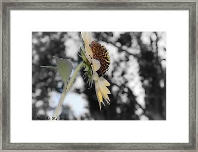 Beatiful Flower Framed Print by Augusta Stylianou