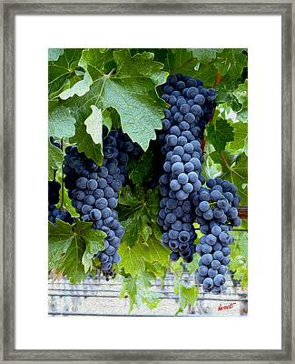 Beautiful Fruit Framed Print