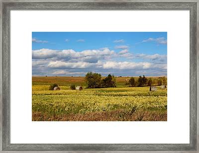 Beauti Fall Framed Print by Elizabeth Sullivan
