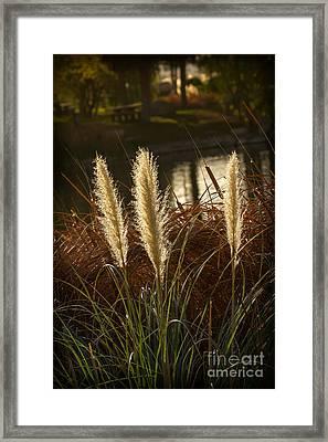 Beautiful Pampas Grass Framed Print