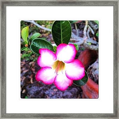 Beautiful ☺ #nature #flowers #flower Framed Print