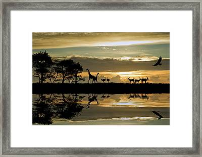 Beautiful African Themed Silhouette With Stunning Sunset Sky Framed Print by Matthew Gibson
