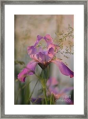 Beautiful And Mystical Iris  Framed Print