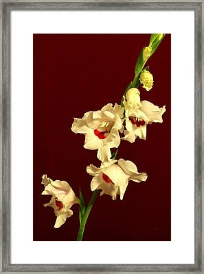 Beautiful Array Framed Print by Deborah  Crew-Johnson