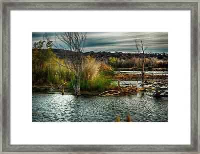 Beautiful Autumn Marsh Framed Print by Kimberleigh Ladd