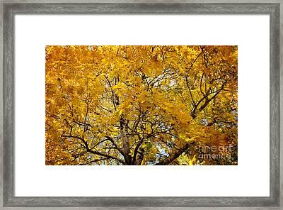 Beautiful Autumn Tree Framed Print by Jolanta Meskauskiene