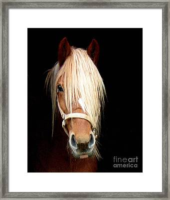 Framed Print featuring the photograph Beautiful Bella by Wendy Coulson