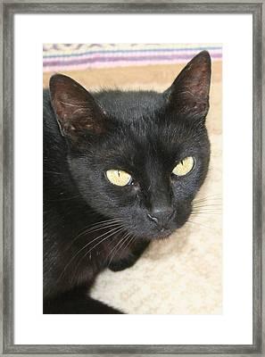 Beautiful Black Cat Portrait  Framed Print by Tracey Harrington-Simpson